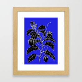 Western Nightshade (also know as Bush Tomato ) - Solanum chippendolei or Solanum coactilferum Framed Art Print