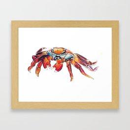 Lightfoot Crab Framed Art Print
