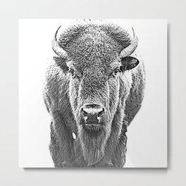 Buffalo Sketch Metal Print