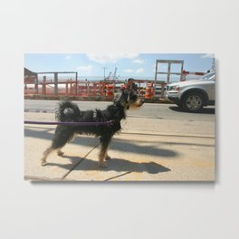 Dog Walker Metal Print