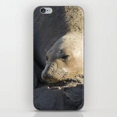Elephant Seal: Contentment iPhone & iPod Skin