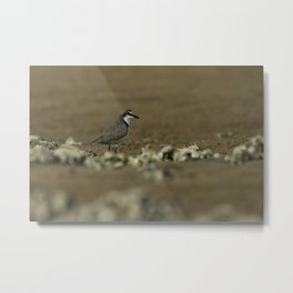 Red-Capped Plover Metal Print