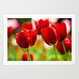 Bold Tulips Art Print
