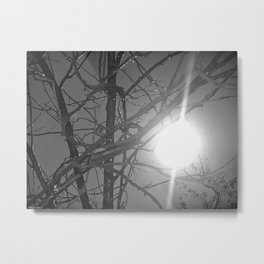 sweaty and sunny wood Metal Print