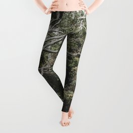 Jungle of Trees in Hilo, Hawaii Leggings