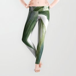 Big palms Leggings