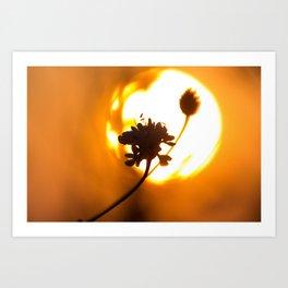 Sun hiding behind a flower 2 Art Print