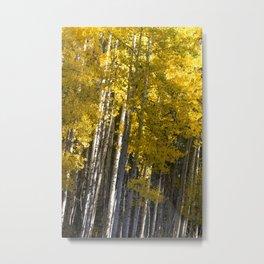 Golden Aspens Metal Print