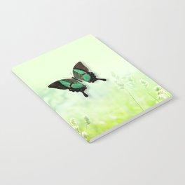 Green Butterfly, Wildflower Meadow, Summer Field Notebook
