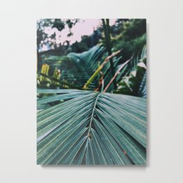 Palm leaves in a cold place Metal Print