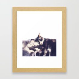 Cats again Framed Art Print