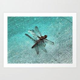 D-Fly Grunge Art Print