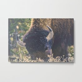 Afternoon Grazing Metal Print