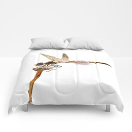 Dragonfly Resting On Seed Head Isolated Comforters