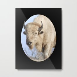 Emerging White Bison  Metal Print