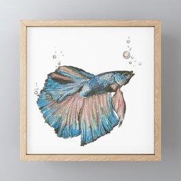 Blue Betta Framed Mini Art Print