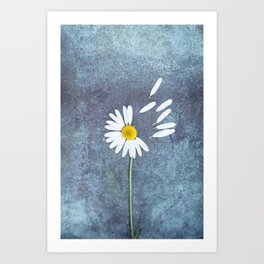 Daisy III Art Print