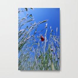 poppy flower no4 Metal Print