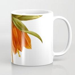 Botanical Print, Fritillaria / Imperial Crown Coffee Mug