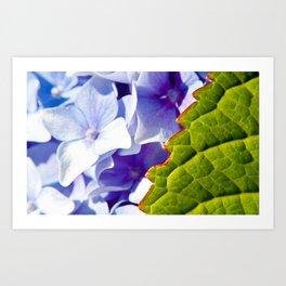 Leaf and flowers Art Print