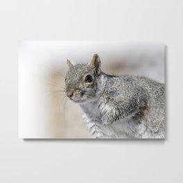 Wet paw Squirrel Metal Print