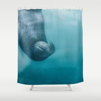 walrus Shower Curtains featuring walrus by adi katz