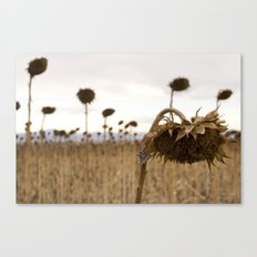 Mourning Field  Canvas Print