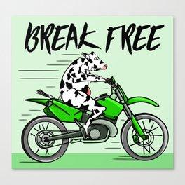 Cow riding a motorbike Canvas Print