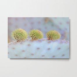 """""""Santa Rita Prickly Pear 2"""" Metal Print"""