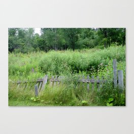 Fence Overgrown Canvas Print