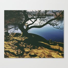 tree shadows. rydal water, lake district, uk Canvas Print