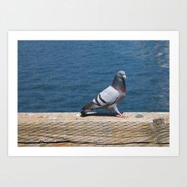 Pigeon2 Art Print
