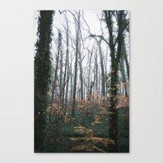Dahlonega Woods Canvas Print