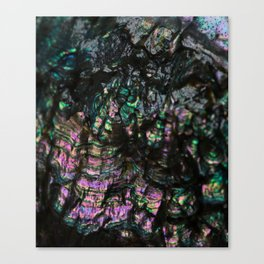 Abalone Shell 4 Canvas Print