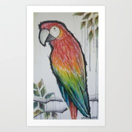 scarlett red macaw Art Print