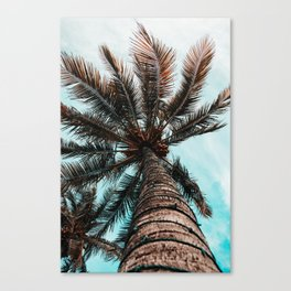 Palm View Canvas Print