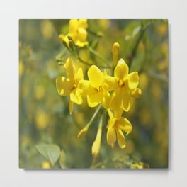 Fragrant Yellow Flowers Of Carolina Jasmine Metal Print