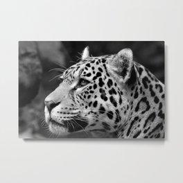 Jaguar B&W Metal Print