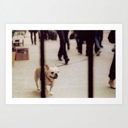 Dog Walking Art Print