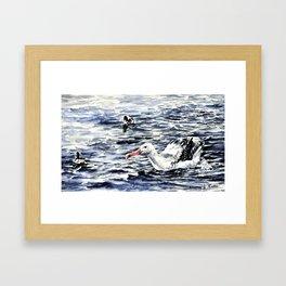 Albatros Framed Art Print