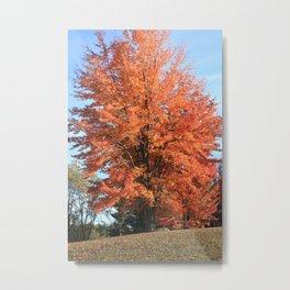 Autumn All Aglow Metal Print