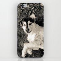 georgia iPhone & iPod Skins featuring Georgia by Sydney S Photography