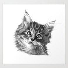 Maine Coon kitten G114 Art Print
