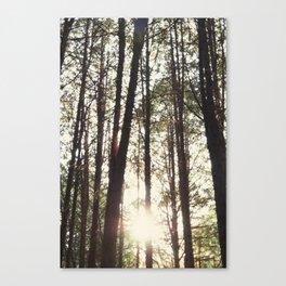 Cullen Gardens Canvas Print