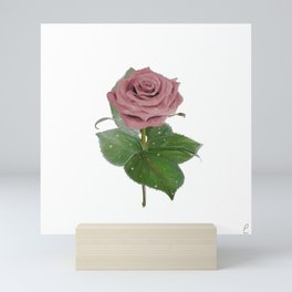 Single Standing Rose (Light Pink) Mini Art Print