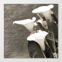 Calla Lily Flower Sepia Photo Canvas Print