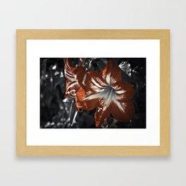 The Blooming Desert Framed Art Print
