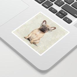 Mr French Bulldog Sticker
