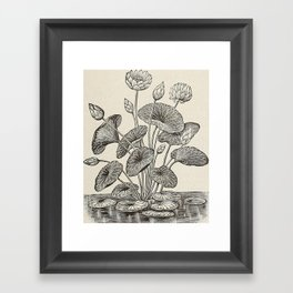Water Lillies Framed Art Print
