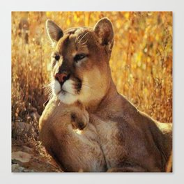 The Golden Thinker 🐾 Cougar 🐾 Canvas Print